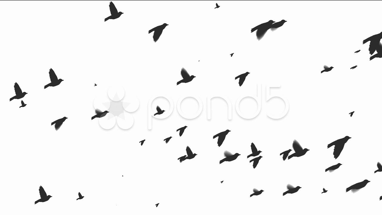 Flying Bird Wallpaper Draw Animalcarecollege Info