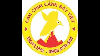 Khướu - Mi mới về. LH 0908070555 / 0944114410 Hà Nội. Facebook : Chim Cảnh Đất Việt.