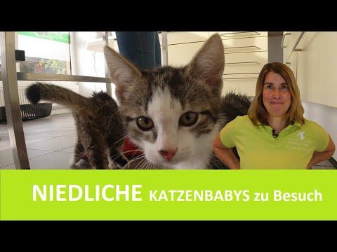 Süße KATZENBABYS und KATZENMAMA in der Praxis |  Sprechstunde #1 mit Dr. med. vet. C. Koch