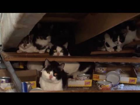 Tennessee Cat Rescue
