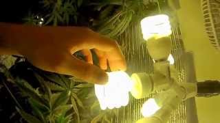 How To Grow Cannabis With CFL Lights Pt. 1