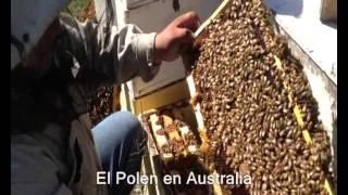 Reemplazo de abeja reina - Manejo de abejas reinas
