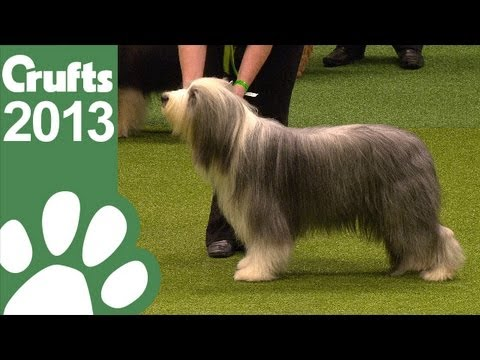 Group Judging (Pastoral) and Presentation - Crufts 2013