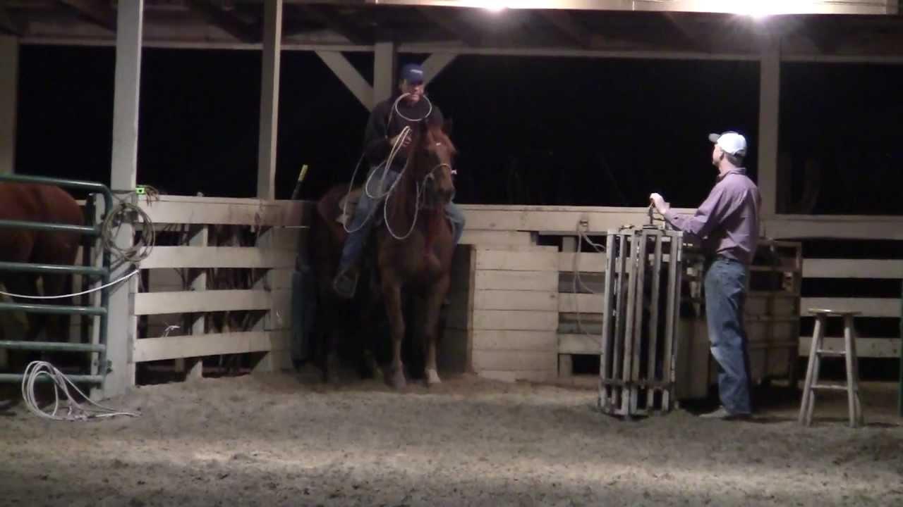 Calf Roping Horse Calf Roping Horse For Sale