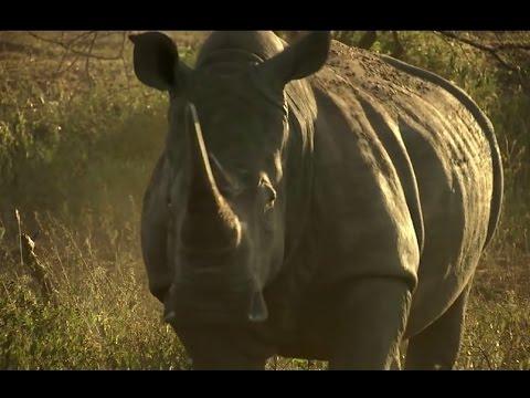 Africa Tourism Wildlife Tourism For Africa