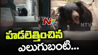 Wild Bear Spotted at Karimnagar BSNL Headquarters | NTV