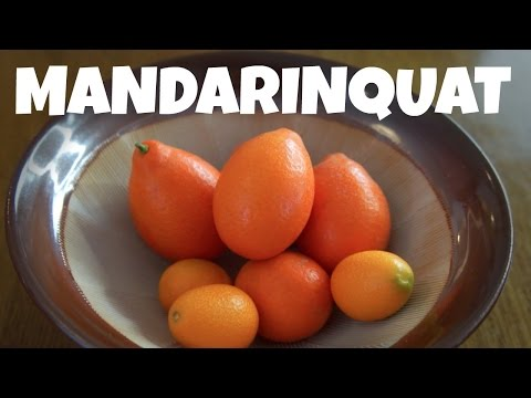 MANDARINQUAT & KUMQUAT Taste Test  | Fruity Fruits