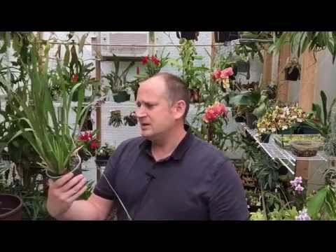 ORCHID FLASKING: HOW TO GROW ORCHIDS FROM SEEDS A BASIC GUIDE TO GERMINATING ORCHID SEEDS