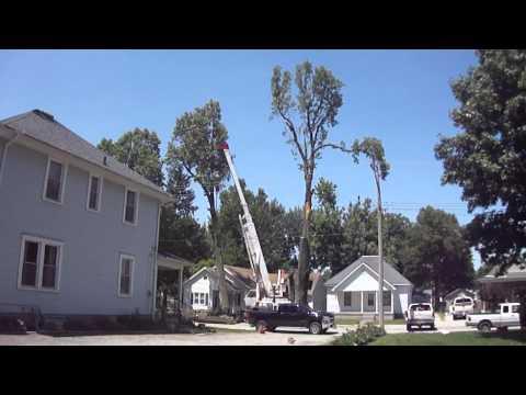 Hughes Tree Service - Taylorville, IL - 6