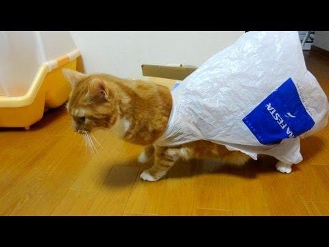 袋に絡まって大変なことになってしまった猫