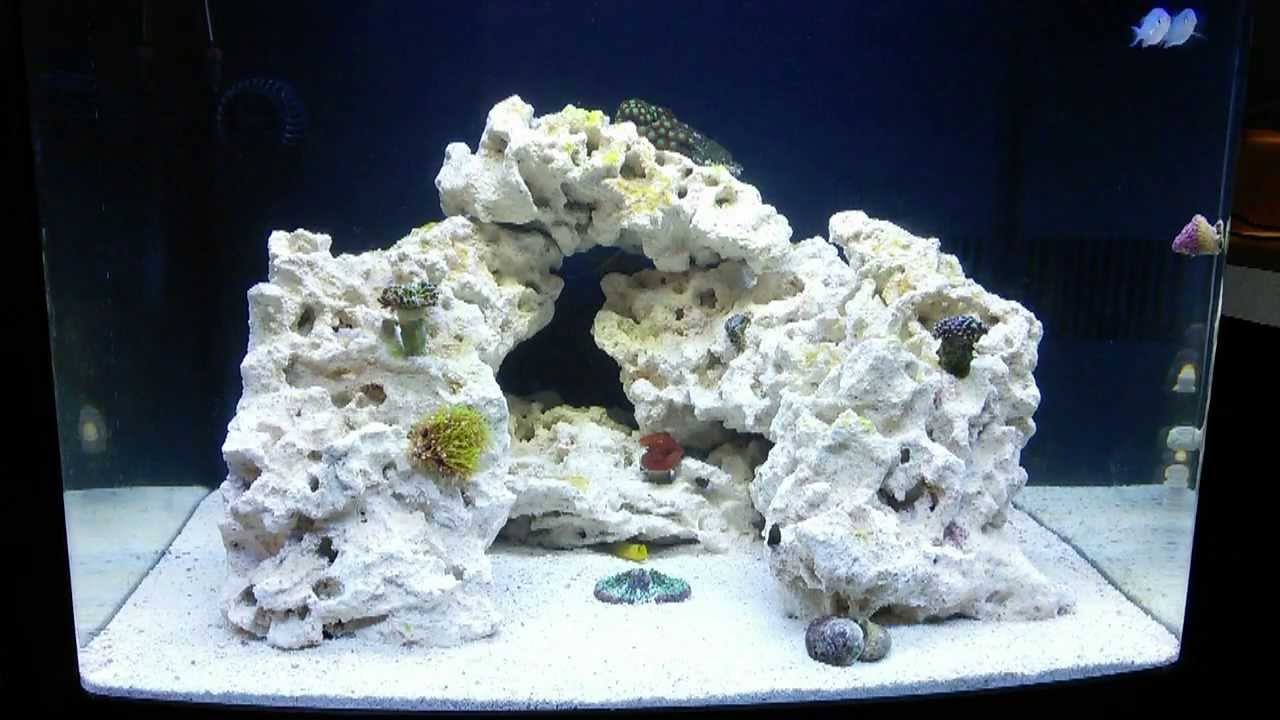 how to set up saltwater tank for beginners