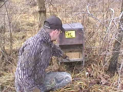 How To Make An Antler Trap Youtube