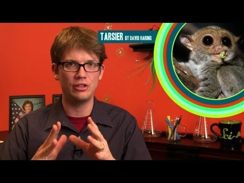 Wheezy Waiter on Movie Science, Mutant Flu Facts, and 2 Sounds You've Never Heard!