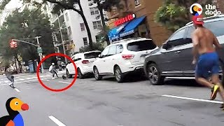 Biker Spots Dog Stuck On NYC Highway And Saves His Life | The Dodo