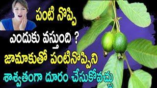 పంటి నొప్పి ఎందుకు వస్తుంది ? |  జామాకుతో పంటినొప్పిని శాశ్వతంగా దూరం చేసుకోవచ్చు | Guava Leaves