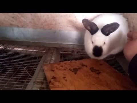 Неожиданно родила крольчиха.
