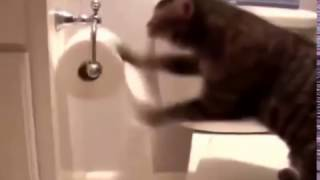 Epic Kittens Funny Video Clips 2017 collection - 1 Minute videos