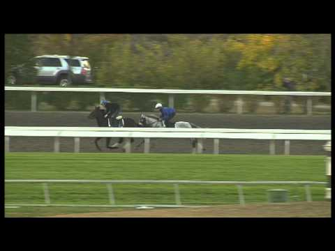 Silver Timber Workout at Keeneland