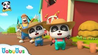 Picking Strawberries with Baby Panda | Strong Tractors & Panda's Farm | BabyBus