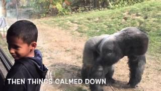 Omaha Zoo - Gorilla Whisperer