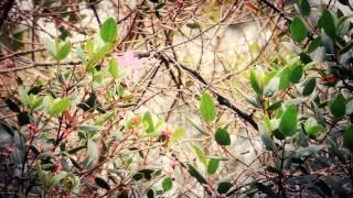 #7027, Arbol siete cueros con flor morada [Efectos], Paisajes rurales