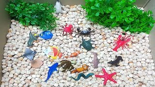 Learn Sea Animal Names and Sounds Box of Toys For Kids Wild Sea Animals