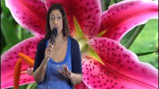 North Node in Sagittarius or 9th House Astrology Series by Nadiya Shah