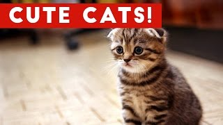 Cutest Cats Compilation 2017 | Best Cute Cat Videos Ever