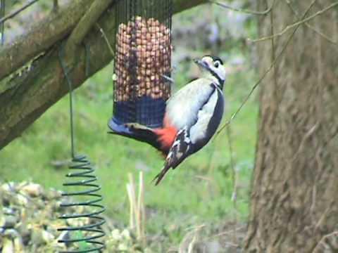 Les oiseaux du jardin youtube for Oiseaux des jardins belgique