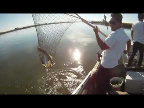 30 inch 10lb Striped bass fishing Antioch Ca Delta