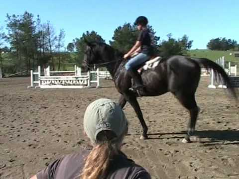 Petaluma Hunter Jumper Horse Training and Riding Lessons