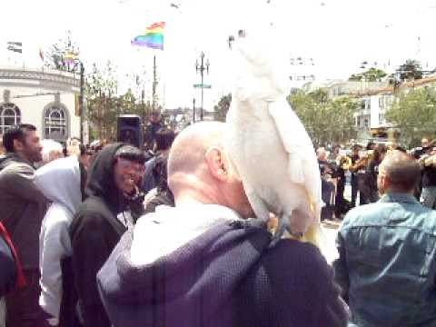Bird Boogies to the SF Gay and Lesbin Marching Band