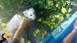 Kayaker Rescues Freezing Dog In River | The Dodo