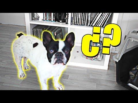 VOY A BUSCAR A MI PERRO DESPUÉS DE MESES...¿Que pasó con mi perro? [Logan G]