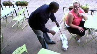 """Friendly"" Man Steals Dogs from Sidewalk Cafe 