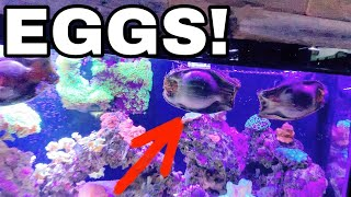 RAISING BABY SHARK EGGS in AQUARIUM!