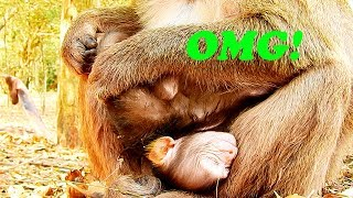 Why Cesca Like This, Baby Just Born Holding Baby Up Side Down|#Monkey Nightmare