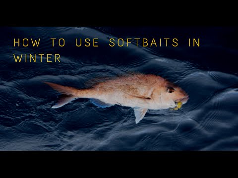 How to use soft baits in Winter time