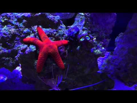 Innovative Marine Nuvo Fusion 20 Nano Reef 2 Half Month Update