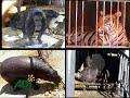 Crianza de animales salvajes en Circos