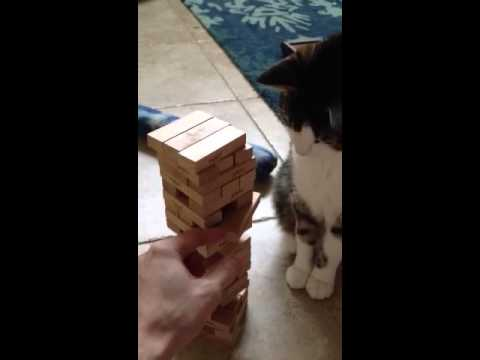 Cat is surprisingly good at Jenga