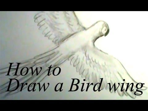 Bird With Open Wings Drawing How to Draw a Bird Wing