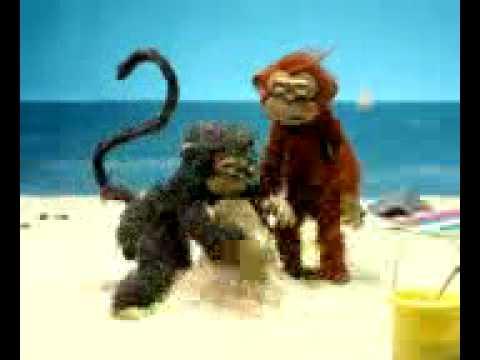monos chistosos