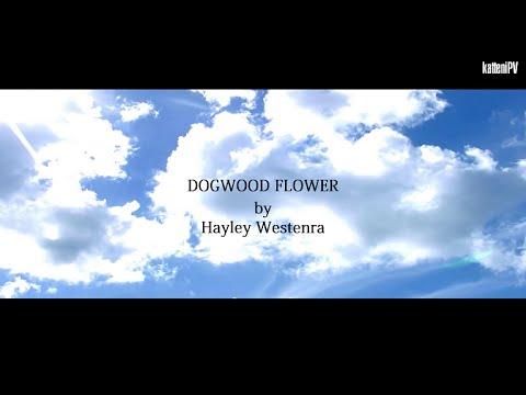 【英語カバー】 ハナミズキ / DOGWOOD FLOWER