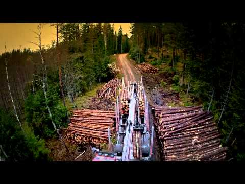 A day in the life of a forestry truck driver