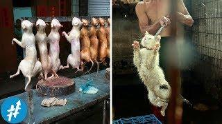 Kucing Digoreng? 7 Makanan EKSTREM & Aneh Di Dunia Ini Bakal Bikin Kamu Mual