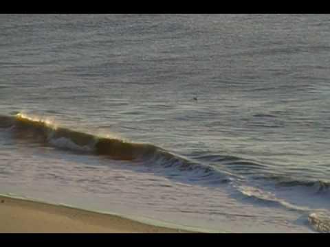 Myrtle Beach Dolphin video