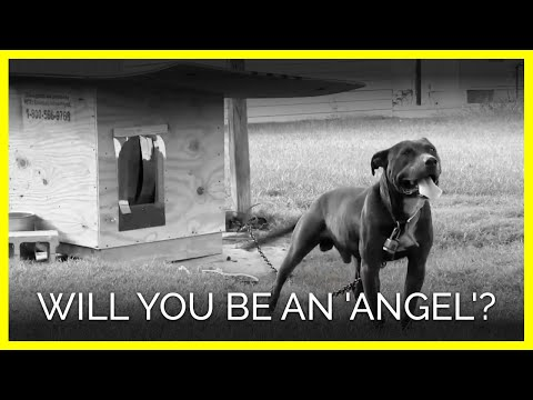 Will You Be an 'Angel'?