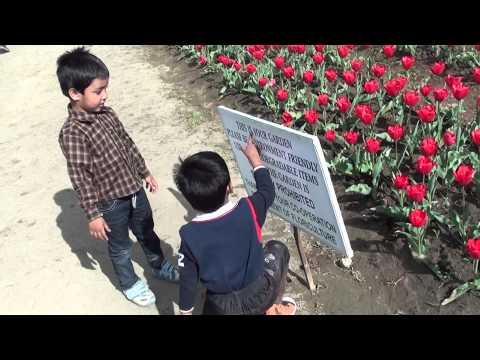 Srinagar - Tulip garden - 2