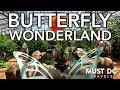 Butterfly Wonderland In Phoenix, Arizona | Must Do Travels